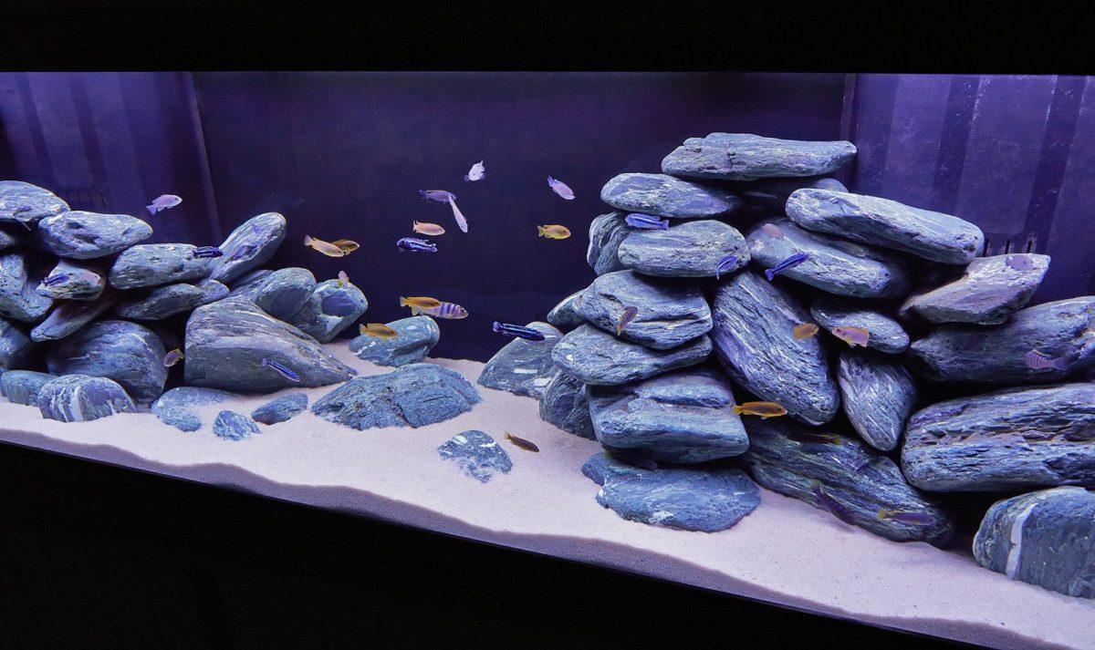 ценны камни для аквариума фото нарисованные